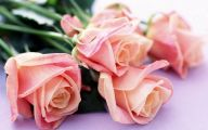 Hd Flower Wallpaper 11 Widescreen Wallpaper