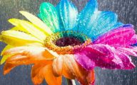Hd Flower Wallpaper 34 Free Hd Wallpaper