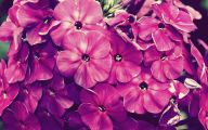 Hd Flower Wallpaper 9 Background