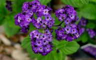 Heliotrope 15 Background Wallpaper