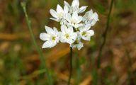 Hyacinth White Flower 13 Cool Hd Wallpaper