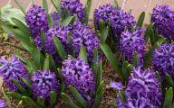 Hyacinth White Flower 26 Wide Wallpaper