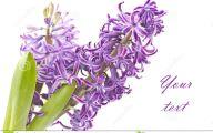 Hyacinth White Flower 7 Widescreen Wallpaper