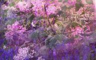 Lilac 75 Desktop Background