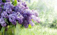 Lilac Flower Wallpaper 6 Desktop Wallpaper