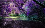 Lilac Wallpaper 17 Cool Hd Wallpaper