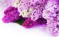Lilac Wallpaper 27 Cool Hd Wallpaper