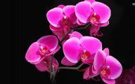 Orchid Wallpaper 11 Cool Hd Wallpaper