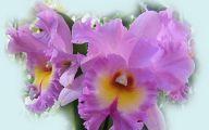 Orchid Wallpaper 19 Hd Wallpaper