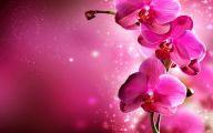 Orchid Wallpaper 24 Widescreen Wallpaper