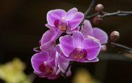 Orchid Wallpaper 25 Desktop Wallpaper