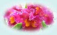 Orchid Wallpaper 33 Hd Wallpaper