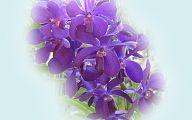 Orchid Wallpaper 34 Free Hd Wallpaper