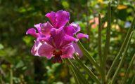 Orchid Wallpaper 38 Widescreen Wallpaper