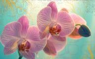 Orchid Wallpaper 40 Cool Wallpaper