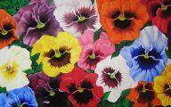 Pansies 103 Background