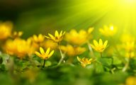 Pictures Of Yellow Flowers 2 Widescreen Wallpaper