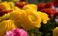 Pictures Of Yellow Flowers 3 Desktop Background