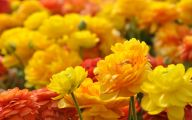Pictures Of Yellow Flowers 4 Free Wallpaper