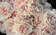 Pink Carnations 35 Wide Wallpaper
