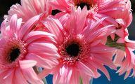 Pink Daisy 11 Widescreen Wallpaper