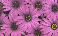 Pink Daisy 28 Wide Wallpaper