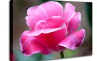 Pink Flowers Canvas  19 Free Wallpaper