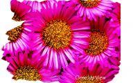 Pink Flowers Canvas  20 Desktop Background