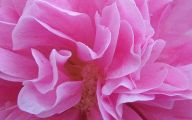 Pink Flowers Clipart  18 Cool Hd Wallpaper