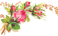 Pink Flowers Clipart  29 Background