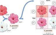 Pink Flowers Codominance  10 Desktop Background