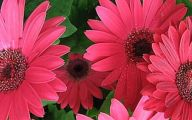 Pink Flowers Cover Photos  10 Cool Wallpaper