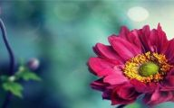 Pink Flowers Cover Photos  13 Cool Wallpaper