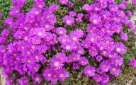 Pink Flowers Cover Photos  22 Wide Wallpaper