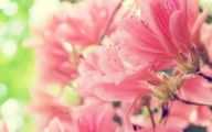 Pink Flowers Cover Photos  9 Cool Wallpaper