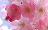 Pink Flowers Cover Photos For Facebook  2 Free Wallpaper