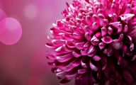Pink Flowers Cover Photos For Facebook  34 Background Wallpaper