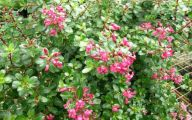 Pink Flowers Dark Green Leaves  22 High Resolution Wallpaper