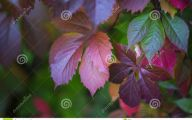 Pink Flowers Dark Green Leaves  5 Free Hd Wallpaper
