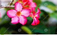 Pink Flowers Dark Green Leaves  8 Cool Wallpaper