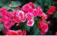 Pink Flowers Decoration  11 Background Wallpaper