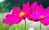 Pink Flowers Decoration  22 Desktop Background