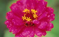 Pink Flowers Delivered  17 Background