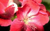 Pink Flowers Delivered  21 Free Hd Wallpaper