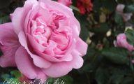 Pink Flowers Delivered  32 Desktop Wallpaper