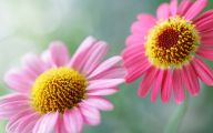 Pink Flowers Desktop Wallpaper  10 Hd Wallpaper