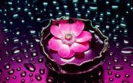 Pink Flowers Desktop Wallpaper  13 Free Wallpaper