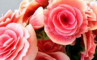 Pink Flowers Desktop Wallpaper  14 Free Wallpaper