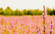 Pink Flowers Desktop Wallpaper  3 Cool Hd Wallpaper