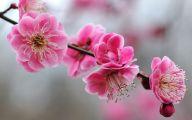 Pink Flowers Download  1 Free Hd Wallpaper